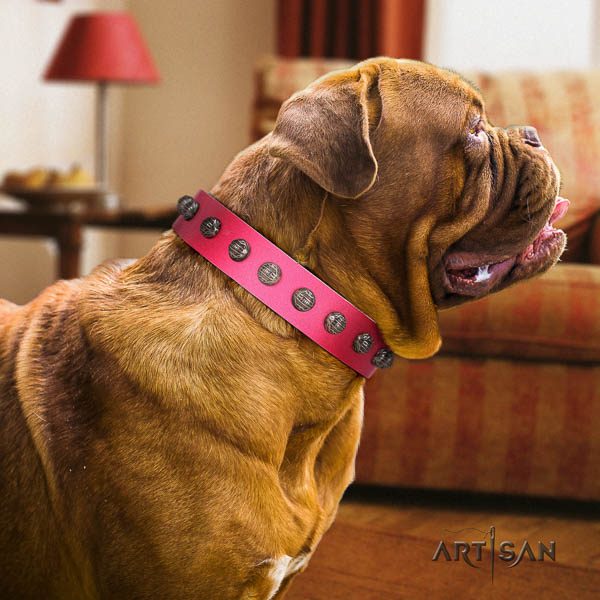 Dogue de Bordeaux fashionable full grain genuine leather dog collar