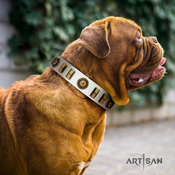 Dogue de Bordeaux everyday walking dog collar of comfortable natural leather