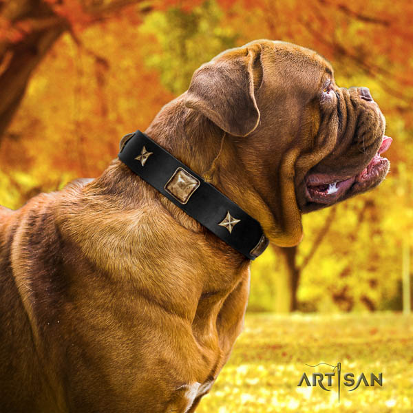 Dogue de Bordeaux fancy walking dog collar of incredible quality natural leather