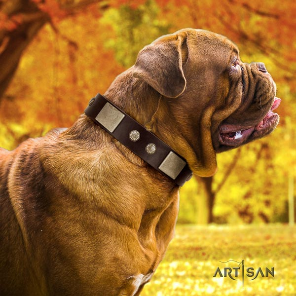 Dogue de Bordeaux comfortable wearing dog collar of trendy leather