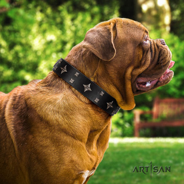 Dogue de Bordeaux comfortable wearing dog collar of flexible genuine leather