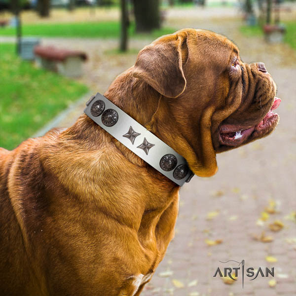 Dogue de Bordeaux awesome full grain leather dog collar