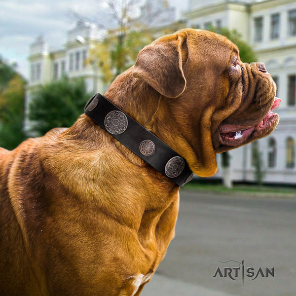 Dogue de Bordeaux daily walking dog collar of fashionable natural leather