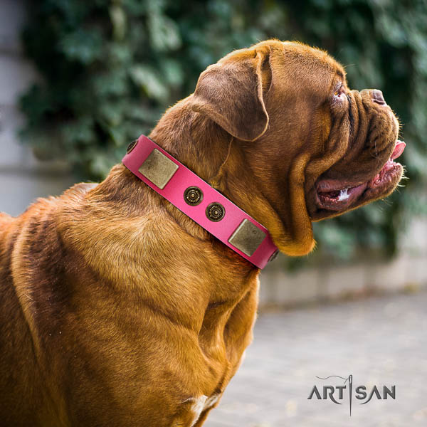 Dogue de Bordeaux stylish walking dog collar of significant quality genuine leather