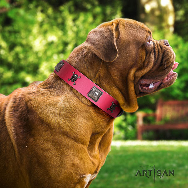 Dogue de Bordeaux daily walking dog collar of significant quality natural leather