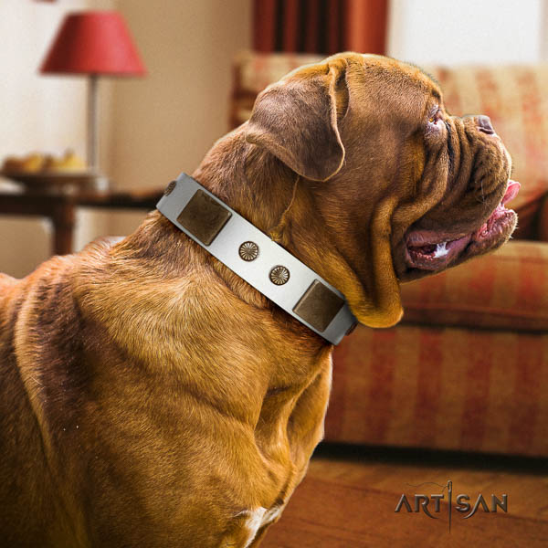 Dogue de Bordeaux comfy wearing dog collar of fine quality leather