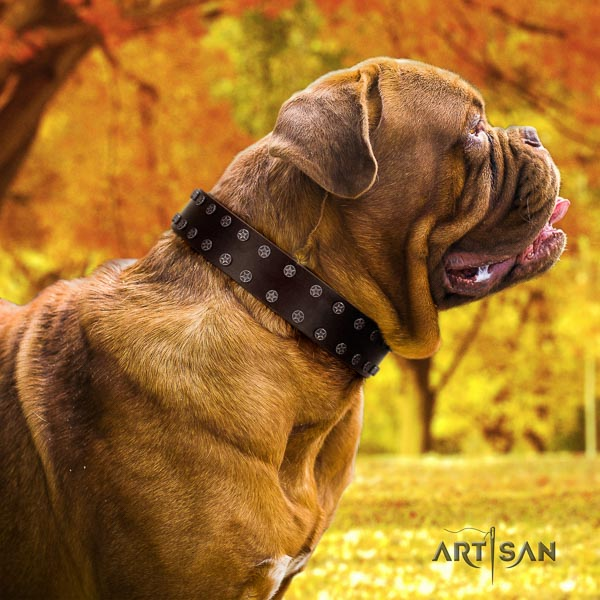 Dogue de Bordeaux stylish genuine leather dog collar