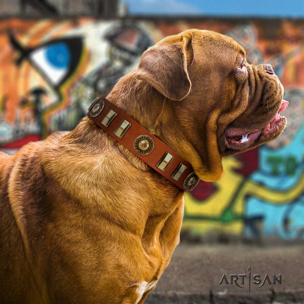 Dogue de Bordeaux comfortable wearing dog collar of designer leather