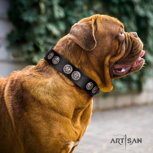 Dogue de Bordeaux handy use dog collar of flexible leather