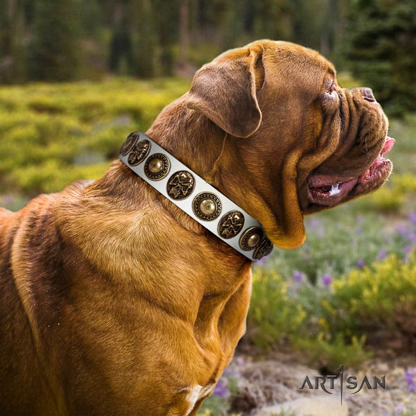 Dogue de Bordeaux comfortable wearing dog collar of designer natural leather