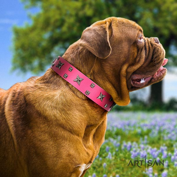 Dogue de Bordeaux comfortable wearing dog collar of top notch quality genuine leather