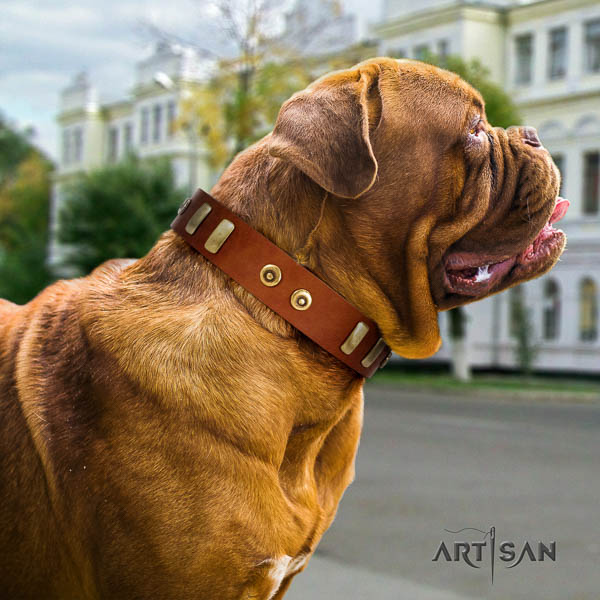 Dogue de Bordeaux fancy walking dog collar of extraordinary quality genuine leather