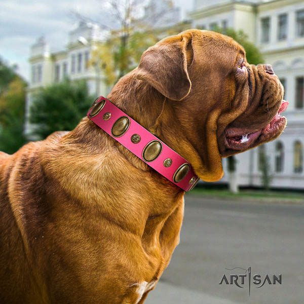 Dogue de Bordeaux stylish walking dog collar of top quality natural leather