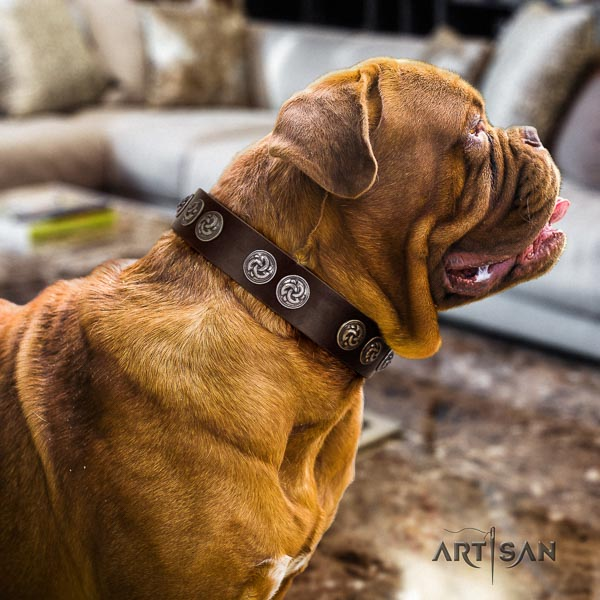 Dogue de Bordeaux top quality leather dog collar