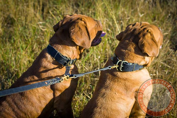 Dogue de Bordeaux black leather collar with rust-resistant hardware for quality control