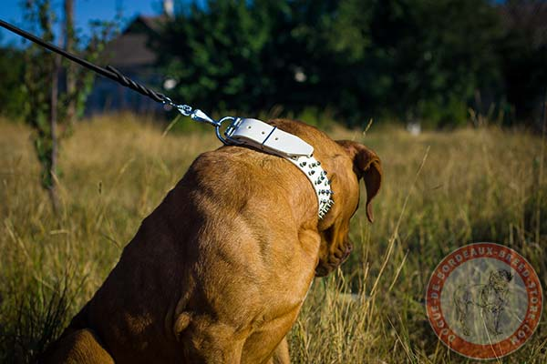 Dogue de Bordeaux white leather collar with rust-proof nickel plated hardware for basic training