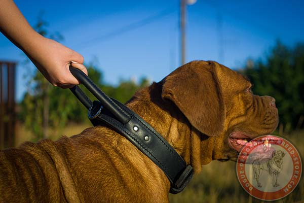 Dogue de Bordeaux black leather collar with rust-proof brass plated fittings for any activity