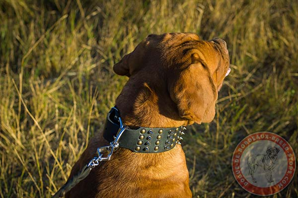 Dogue de Bordeaux black leather collar with rustless quick release buckle for better comfort