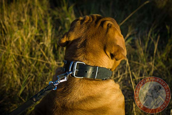 Dogue de Bordeaux black leather collar wide with d-ring for leash attachment for improved control