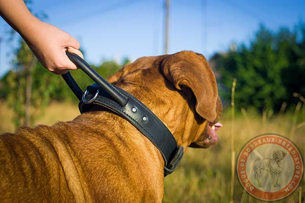 Dogue de Bordeaux black leather collar of genuine materials with handle for professional use