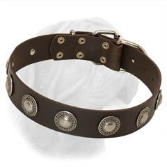 Great Width Leather Buckle Collar with One Row of Brass Plated Rounded Decorated Studs