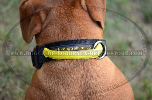 Everyday Nylon Collar with Handle and Quick Release Buckle for Dogue de Bordeaux