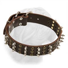 French Mastiff Extra Wide Walking Collar with Spiked-Studded Decoration
