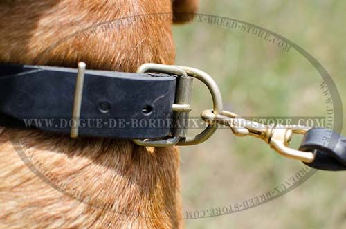 Plated Leather Collar For French Mastiff with Quality Hardware