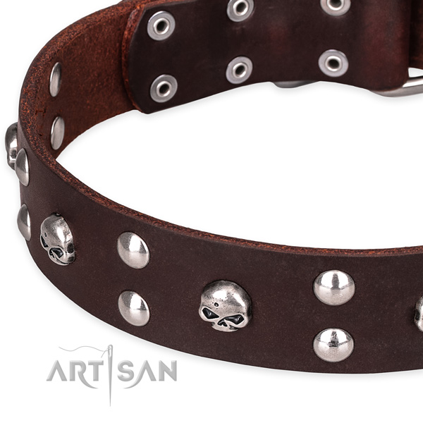 Day-to-day leather dog collar with extraordinary adornments