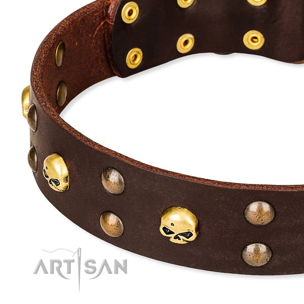 Full grain leather dog collar for stylish walks