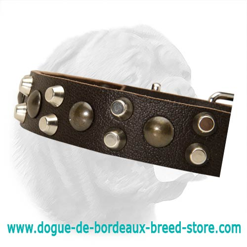 1 1 5 Inches Wide Dogue De Bordeaux Spiked Studded Leather