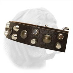 1 1/5 Inches Wide Leather Collar Decorated with Spikes and Studs for French Mastiff