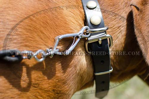 Durable Buckle on Studded Leather Dog Collar