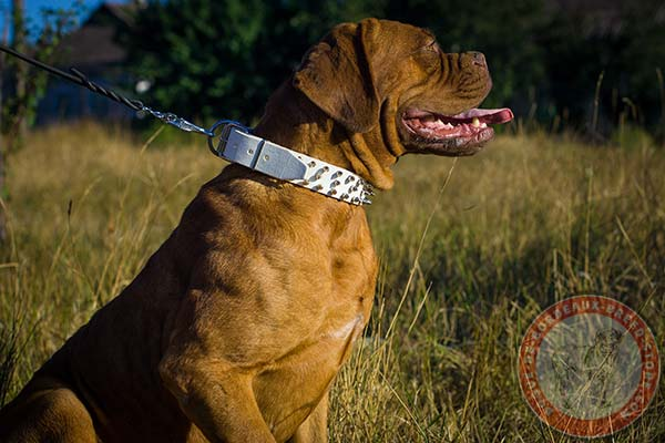 Designer white Dogue de Bordeaux collar