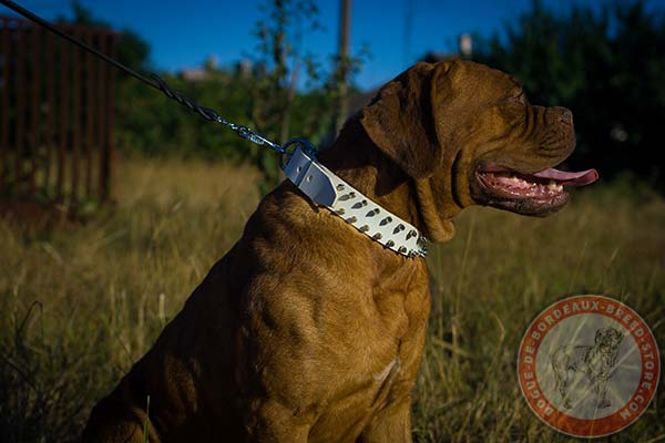White Dogue de Bordeaux leather collar for safe control