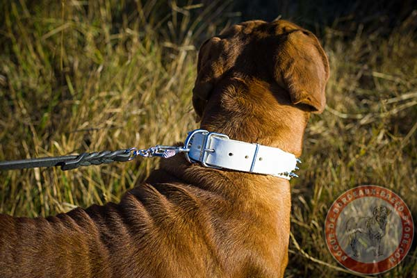 Easy to adjust white Dogue de Bordeaux collar