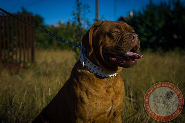 Delicate white Dogue de Bordeaux leather collar