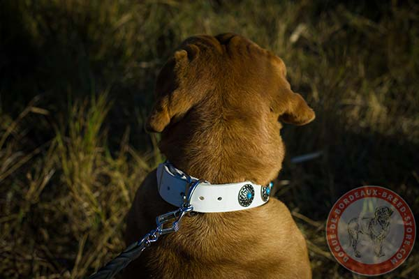 White Dogue de Bordeaux collar with riveted hardware