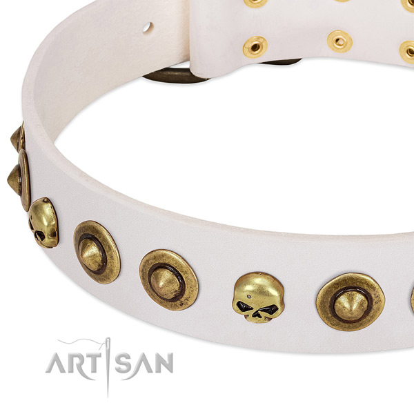 Unusual studs on leather collar for your four-legged friend
