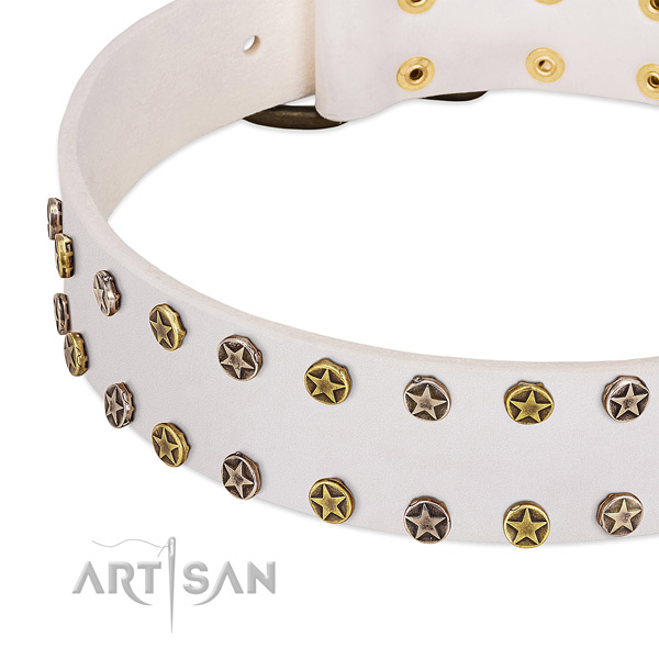 Impressive studs on leather collar for your dog