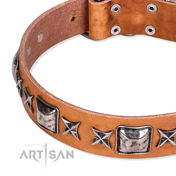 Everyday walking embellished dog collar of top notch full grain genuine leather