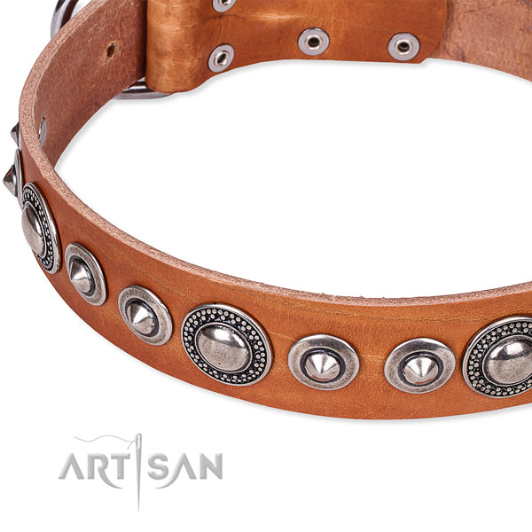 Daily use adorned dog collar of finest quality full grain natural leather