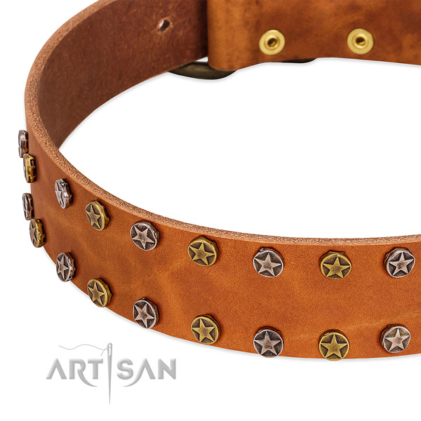 Stylish walking leather dog collar with amazing decorations