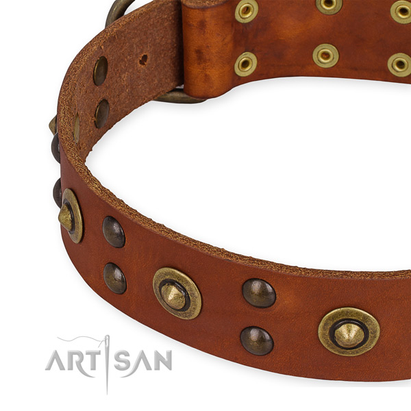 Full grain genuine leather collar with strong fittings for your stylish canine