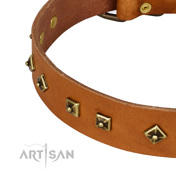 Fashionable leather collar for your impressive pet