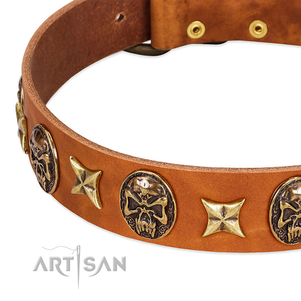 Reliable traditional buckle on leather dog collar for your pet