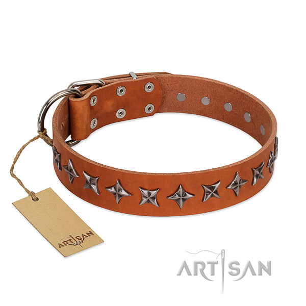 Everyday walking dog collar of fine quality full grain genuine leather with embellishments