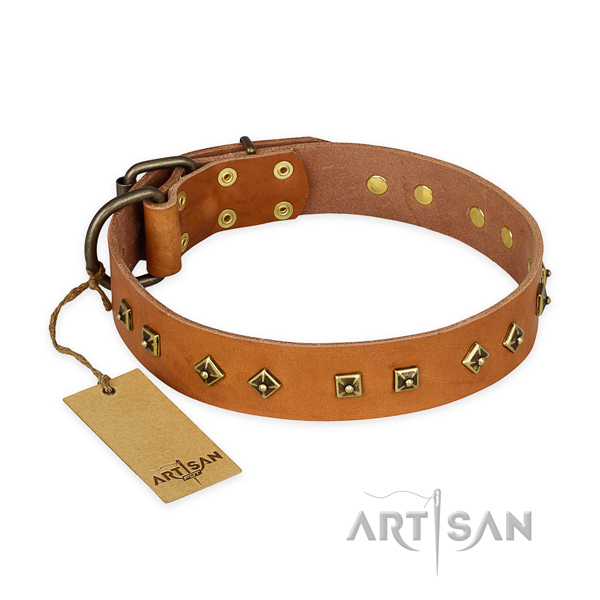 Designer natural leather dog collar with corrosion proof fittings