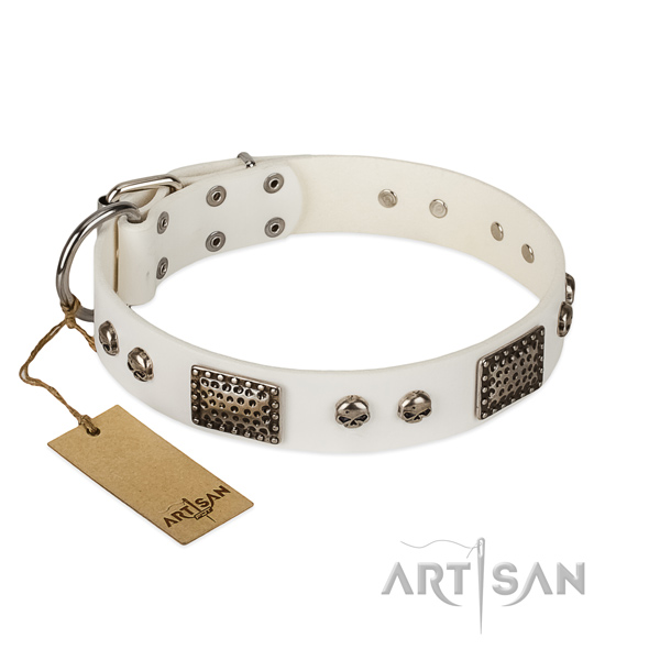 Easy wearing full grain leather dog collar for walking your canine