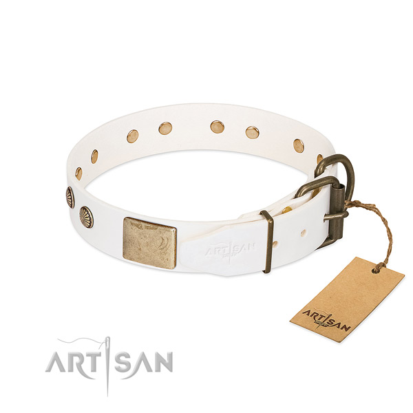 Corrosion proof adornments on stylish walking dog collar